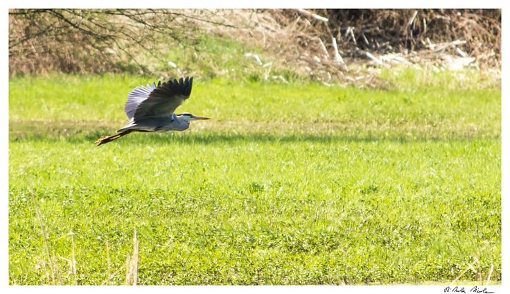 In volo   Flickr - Photo Sharing!