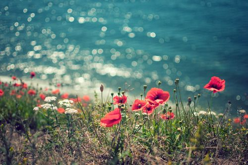 seasidePink Flower, Red Flower, Cyclades Greece, The Ocean, Peace, At The Beach, Love Photography, Poppies Flower, The Sea