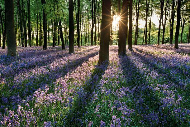 /: Spring Flower, Amazing Photography, Flower Landscape, Landscape Photography Tips, Scenery Photography, Digital Photography, Beautiful Photography, Landscape Photographers