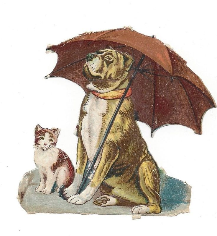 Victorian Die Cut Scrap Dog not Sharing his Umbrella with Cat