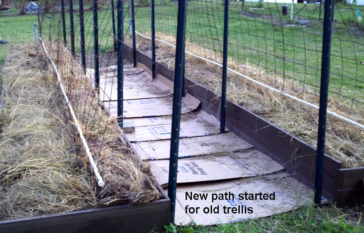 started with heavy cardboard for a path between the hay planting beds of the arched trellisesArches Trellises