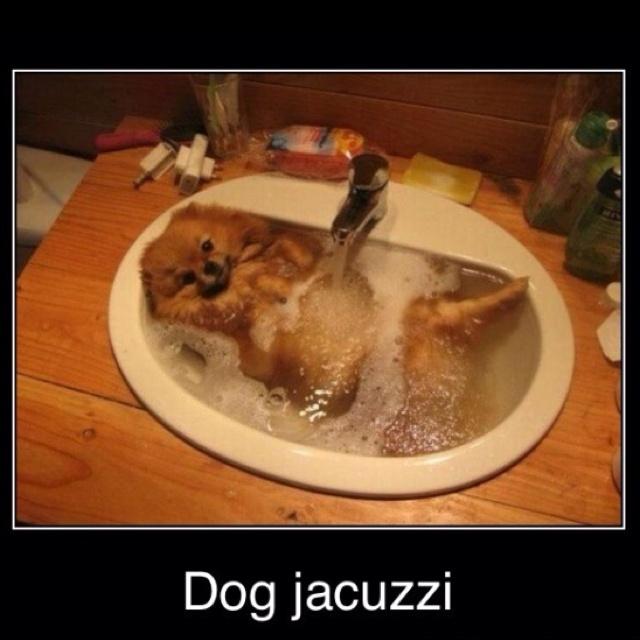 Lol, what an amazing dog & pic title!: Dogs, Spa Day, Bathtime, Sinks, Bubbles Bath, Pomeranians, Hot Tubs, Animal, Bath Time