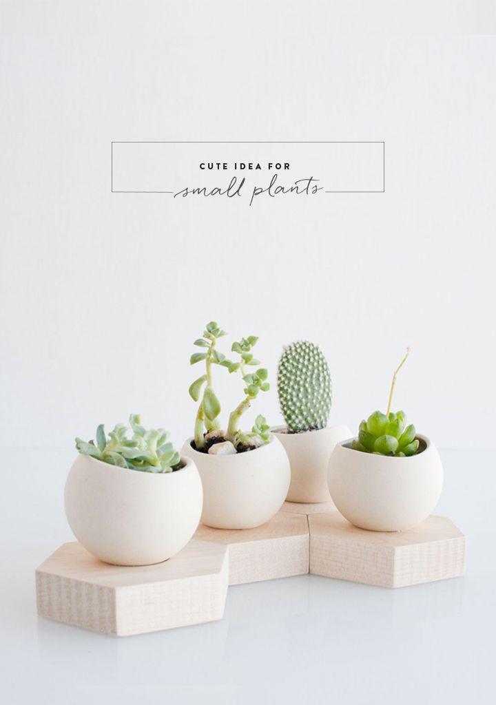 79 Ideas . Plantitas en pequeños botes