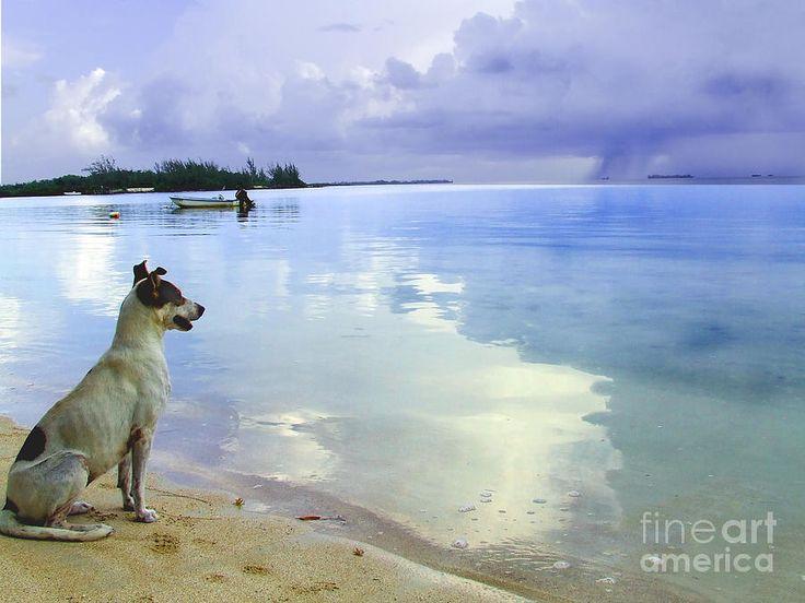 Storm watcher by Vanda Sucheston Hughes.