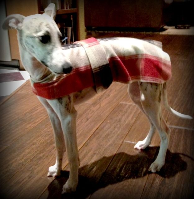 Colorful Dog Coat Sewing Patterns Free Gift - Easy Scarf Knitting ...