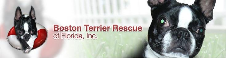 Boston Terrier Rescue of Florida, Inc.