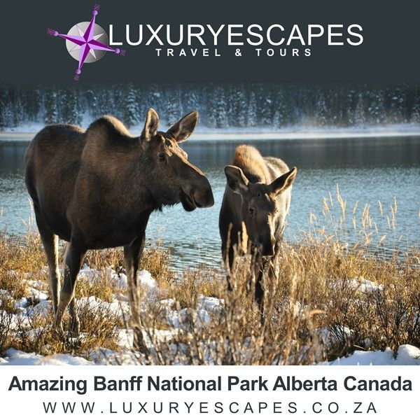 Pristine wilderness, snow-capped mountains, and magical lakes, the Banff National Park is truly one Canada's most majestic areas. Go explore! www.luxuryescapes.co.za