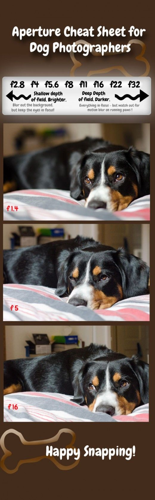How to Photograph Dogs: What is Aperture and How can it Improve your Pet Photos?
