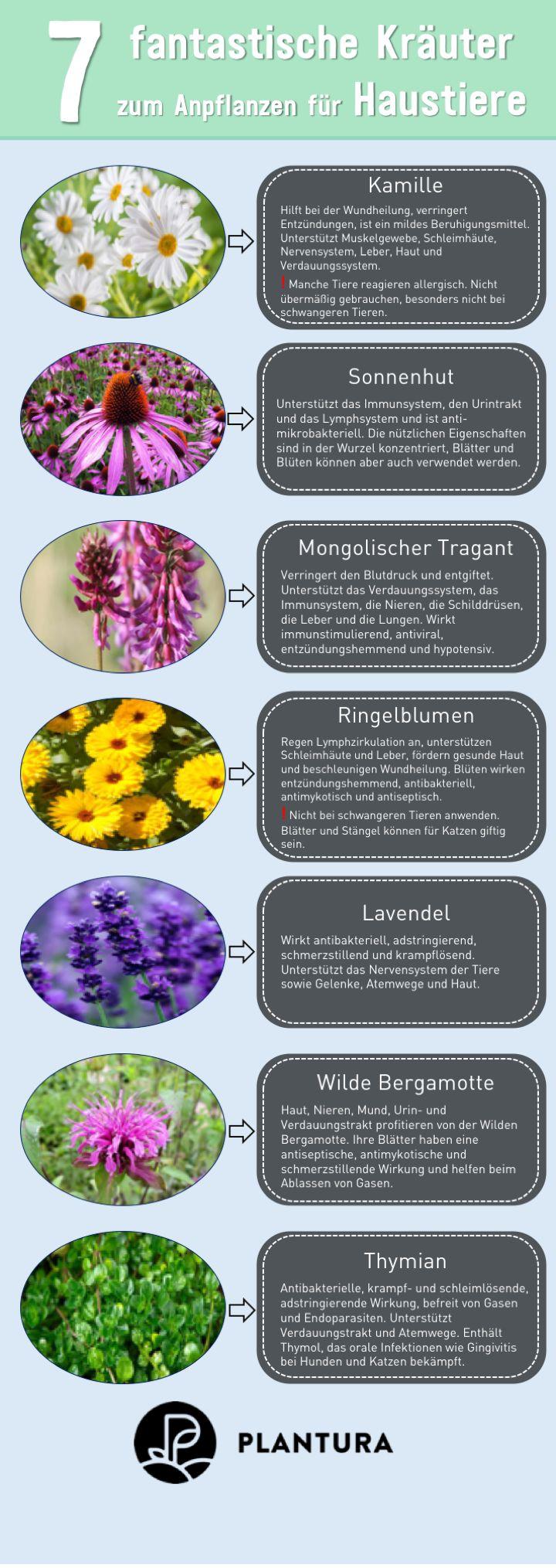 10 haustierfreundliche pflanzen f r garten wohnung tierfreundlicher garten pinterest. Black Bedroom Furniture Sets. Home Design Ideas