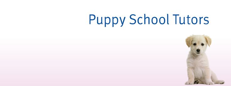Puppy school classes, Bickington, Weds and Thu evenings.