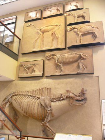 Amherst College Museum of Natural History free admission Tues- Fri 11AM- 4 PM