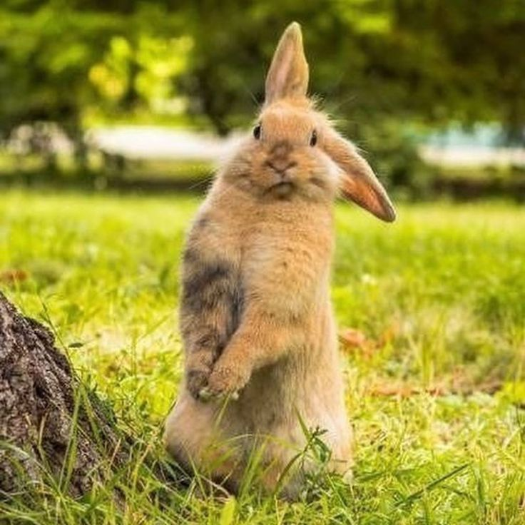 Заяц прикол картинка