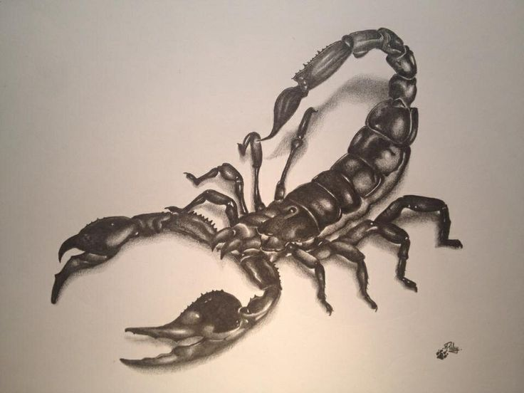 scorpion drawing my tattoo for dad pinterest drawings and scorpion. Black Bedroom Furniture Sets. Home Design Ideas