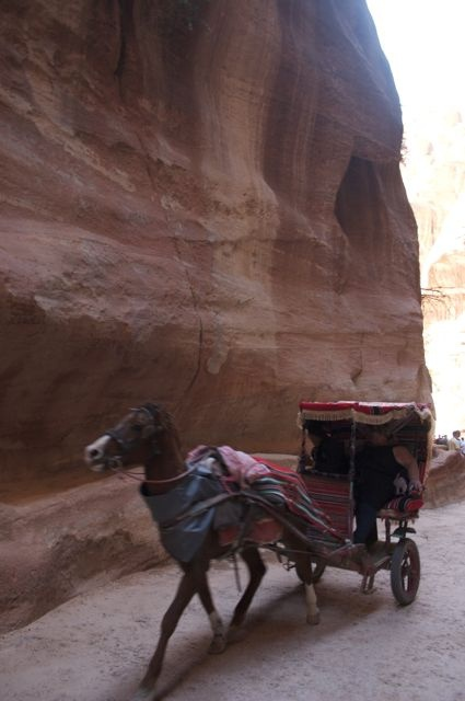 272 Best Images About Horse And Buggy On Pinterest