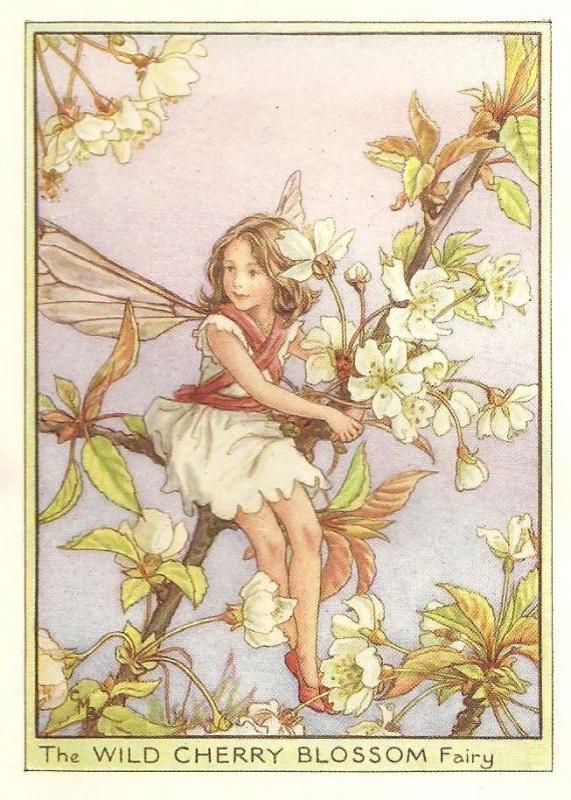 http://www.wellandantiquemaps.co.uk/lg_images/The-Wild-Cherry-Blossom-Fairy.jpg