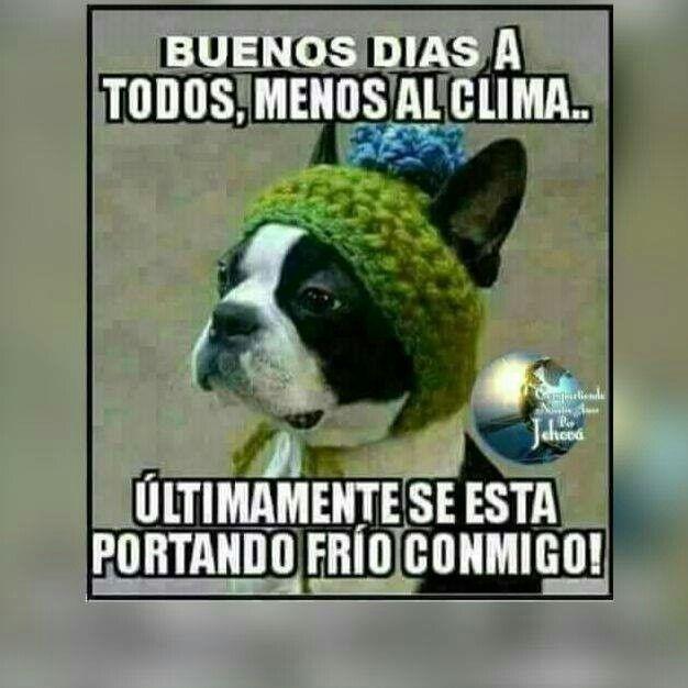 Pin De Fernanda Nieto En Bonito Dia Memes De Frio Buenos Dias Comicos Saludos De Buenos Dias