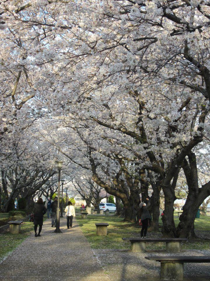 Kosano Park - Yokosuka - Japan