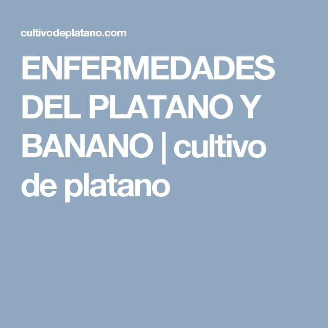 ENFERMEDADES DEL PLATANO Y BANANO   cultivo de platano