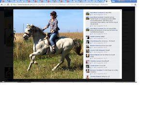Pitbull Författare Barbro Bruhn: Arabhäst som kallas Pre ras och heter Alegro  hitt...