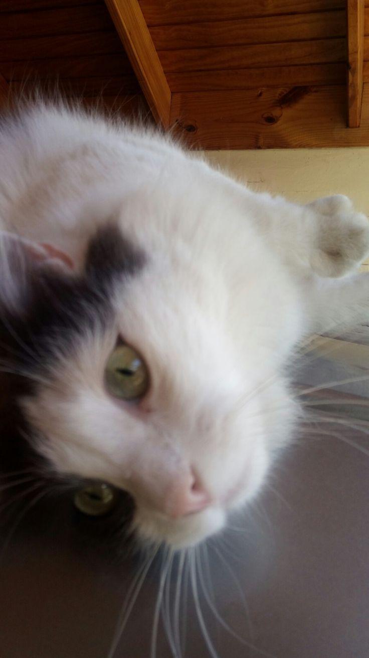 Mi Tom precioso