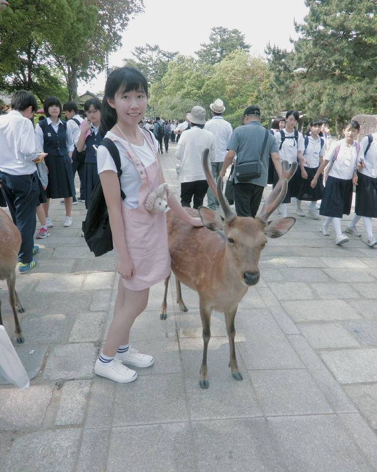 20160524 終於跟鹿拍到了超愛亂跑欸 追得我好狼狽.. 好多學生 制服好可愛哦 :你腳這麼細 叫我在旁邊情何以堪 #day2#japan#nara#deer#奈良公園#東大寺#鹿せんべい