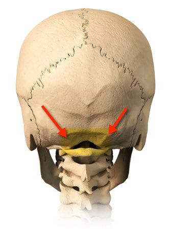 Occipital neuralgia is a condition that affects the back of the skull and that will make your life miserable. Occipital neuralgiais when one feels constant cervical pain, in the area of large and small occipital…