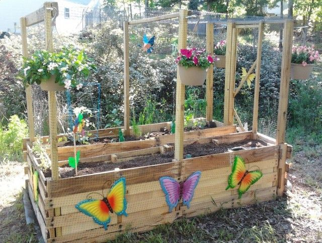 M s de 25 ideas incre bles sobre plantar pimientos en for Cultivo pimiento huerto urbano