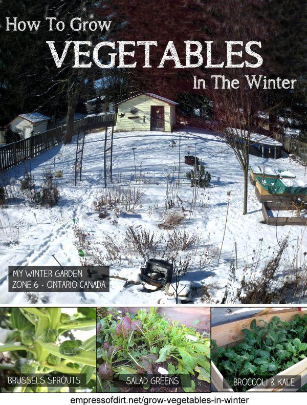 How To Grow Veggies In The Winter at empressofdirt.net/grow-vegetables-in-winter