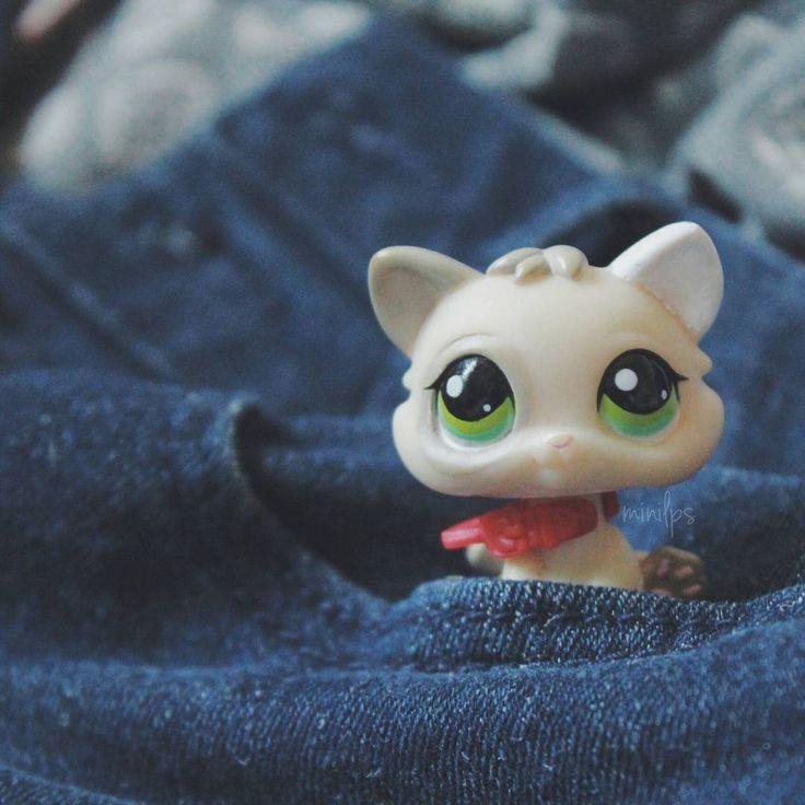 32 Best Lps Bon Bon Kittens And Lps Kittens Images On