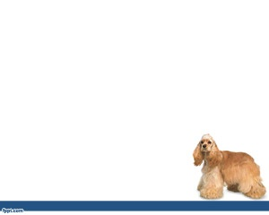 Definitely this is the perfect PowerPoint template for animal presentations or American Cocker Spaniel PPT ready to be used by pet stores or in any pet store PowerPoint presentation