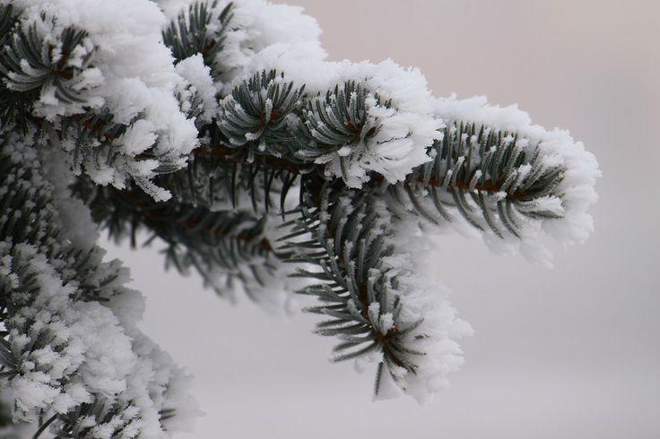 Winter by Rausch Wilhelm Robert on 500px