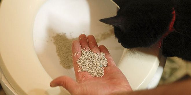 Aprende aquí la fórmula secreta para enseñarle a tu gato a utilizar el inodoro y dile adiós a la caja de arena y a los malos olores de una vez por todas. Clic Aquí>>> http://sobreperrosygatos.com/ensenarle-a-tu-gato-a-utilizar-el-inodoro/