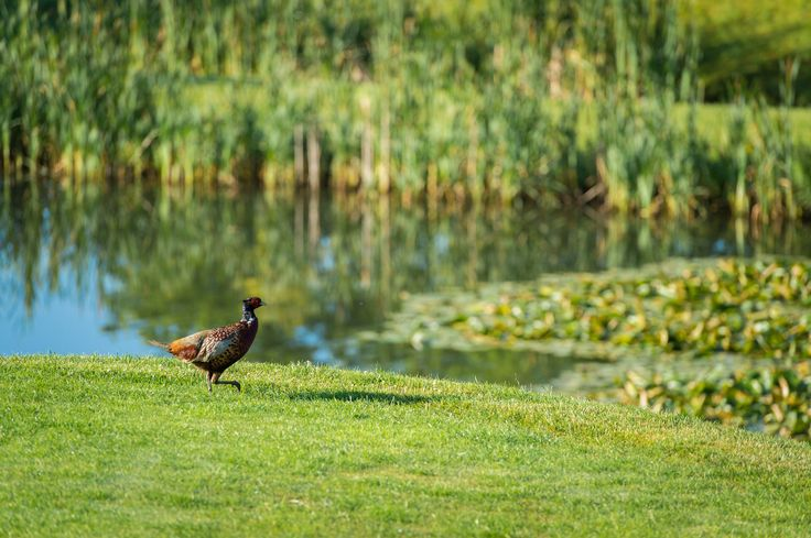 Our beautiful setting is a haven for wide varieties of wildlife.