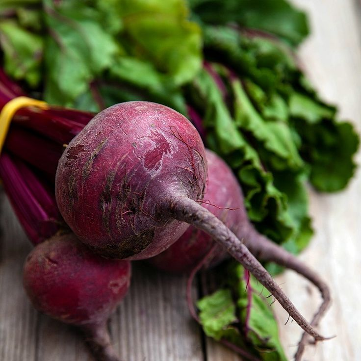 "Grow Heirloom Organic Beets - Plant Organic Detroit Dark Red Beet SeedsIf Jack Kerouac was the ""King of the Beats"", then Detroit Dark Red is surely the ""King of the Beets"". This very popular and versatile beet is rich in color and texture. Plant Organic Detroit Dark Red Beet seeds and double your pleasure by enjoying both the roots and the greens. The Organic Detroit Dark Red prefers full sun and good drainage, but in most climates can also tolerate partially filtered shad..."