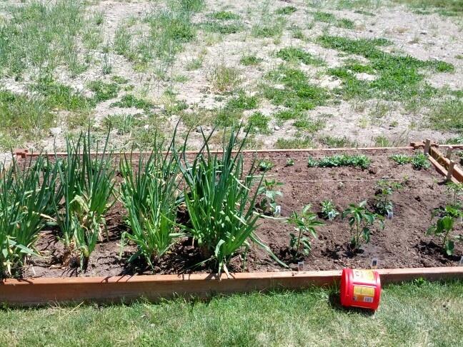 Spring 2013 garden!