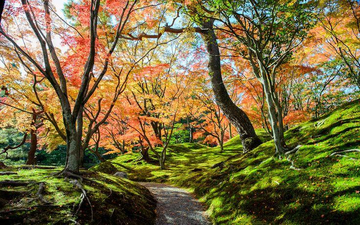 Kyoto Photo: Sento Gosho Imperial Palace