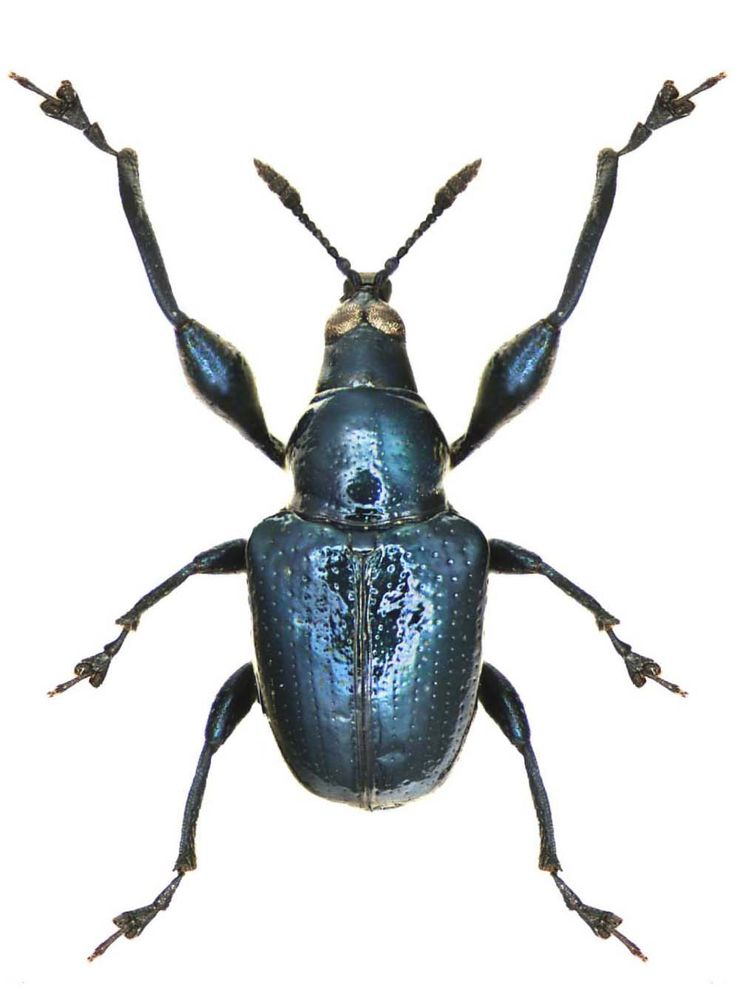 of beetles and angels essay Sparknotes are the most helpful study guides around to literature, math, science, and more find sample tests, essay help, and translations of shakespeare.