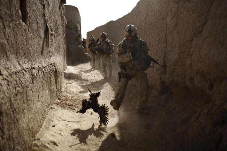 11 de septiembre de 2010. Un soldado canadiense de The Royal Canadian Regiment, persigue a un pollo segundos antes de que él y su unidad fuesen atacadas con granadas disparadas por encima del muro durante un patrullaje en Salavat, al suroeste de Kandahar, Afganistán. ANJA NIEDRINGHAUS (AP)
