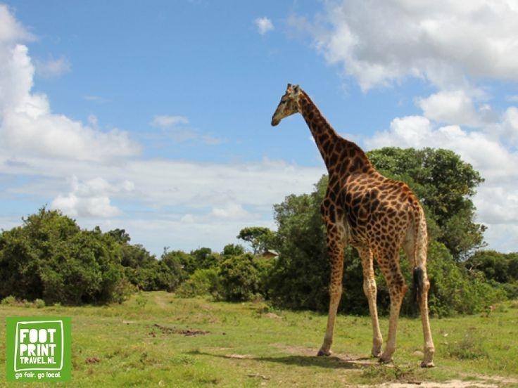 Zuid-Afrika reizen | Blog: De beste safari's aan de Tuinroute. Malaria vrij op safari in Zuid-Afrika! - Footprint Travel