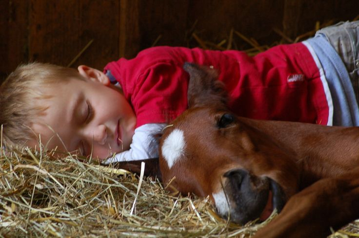 : Nap Time, Animals, Sweets, Horses, Children, Baby, Kids, Friend, Country