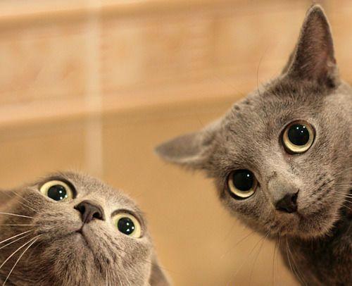 【画像】思わず保存した動物画像wwwwwwwwwwwwww : 暇人\(^o^)/速報 - ライブドアブログ
