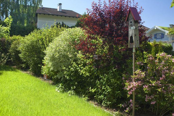 Eine Blütenhecke aus Sträuchern und Stauden bringt nicht nur prächtige Farben in den Garten, sondern bietet außerdem auch ganzjährigen Sichtschutz. Hier erfahren Sie, wie Sie eine Blütenhecke ganz einfach selber anlegen und pflegen können. #blütenhecke