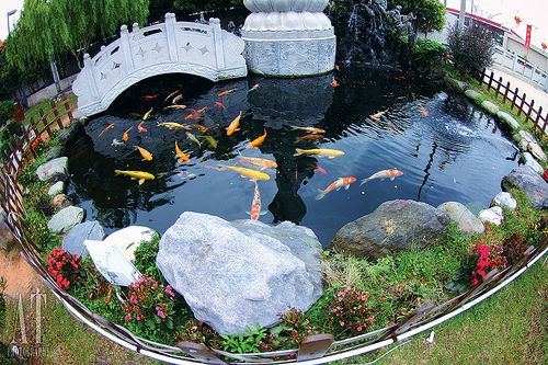 Ponds are quite annoying to keep up with, but the coy fish sure do make a nice presentation!
