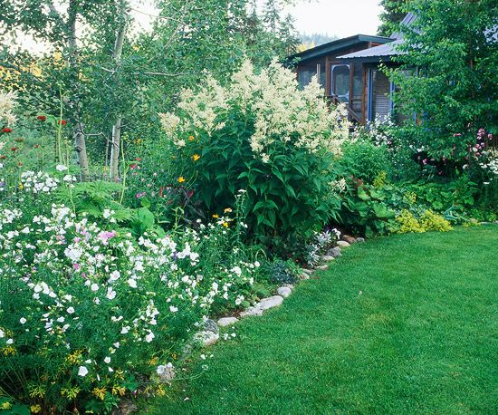 49 best tall border plants images on pinterest border plants tall plants giant knotweed is a perennial that forms think clumps 6 feet tall and mightylinksfo