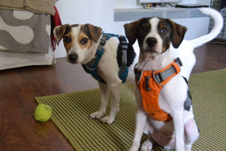 46 best Ruff Front Range Harness images on Pinterest | Dog ...
