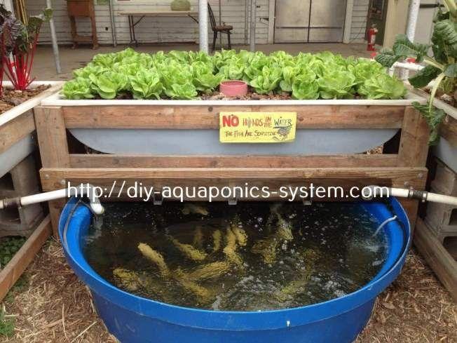 Merveilleux Aquaponic Herb Garden
