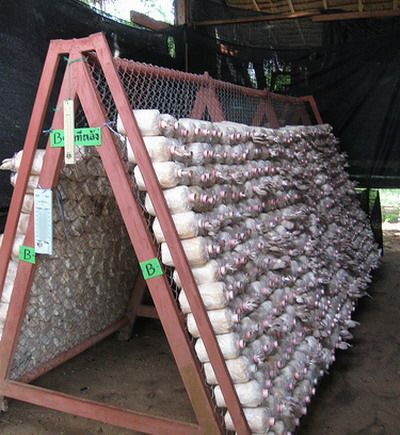 Growing Mushrooms for Income - How to operate a growing mushrooms business.