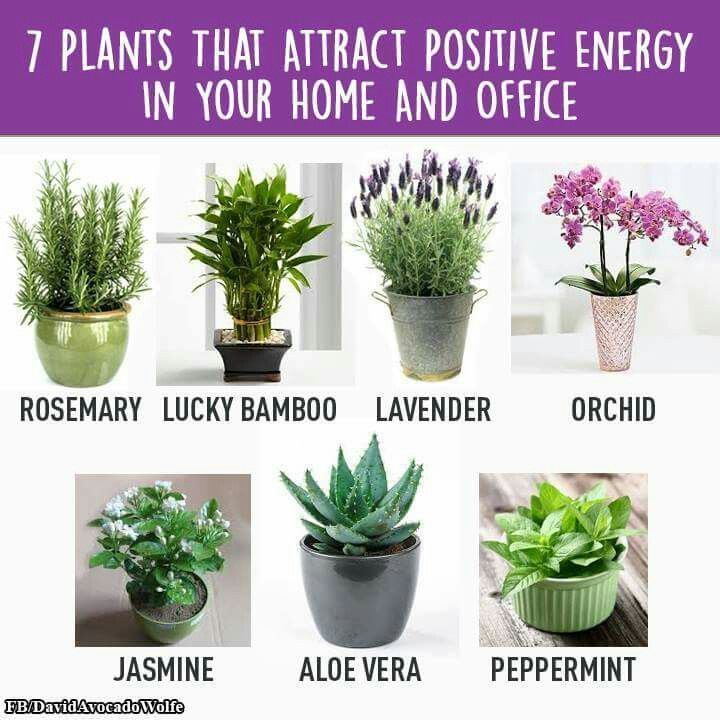 best indoor office plants. home gym 7 plants that attract positive energy in your and office http best indoor p