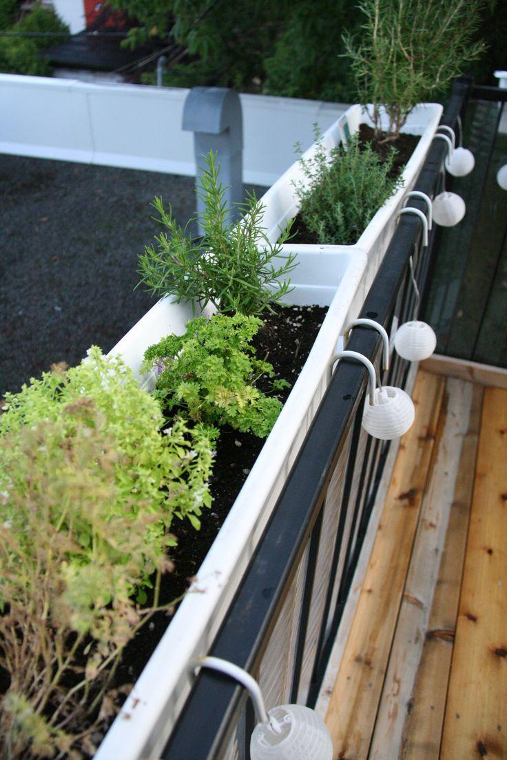 Fines herbes fraîches  juste à portée de main sur la terrasse et à proximité de la cuisine!