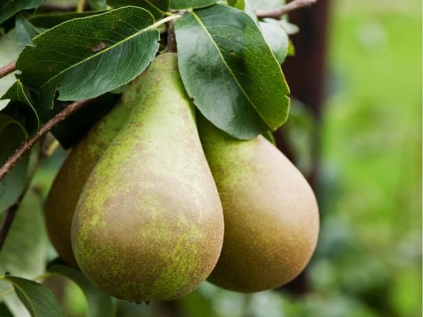 Can you freeze pears? Yes, you can. Learn how to freeze pears from experts at HGTV, along with tips on using the frozen fruit.